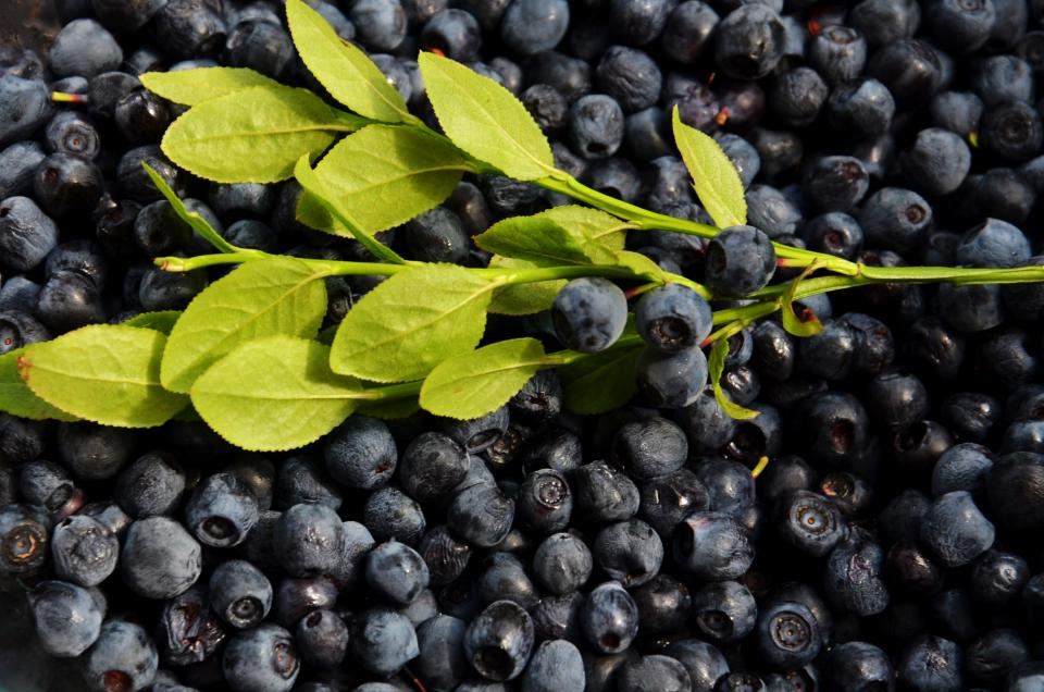 blueberries fruits food healthy