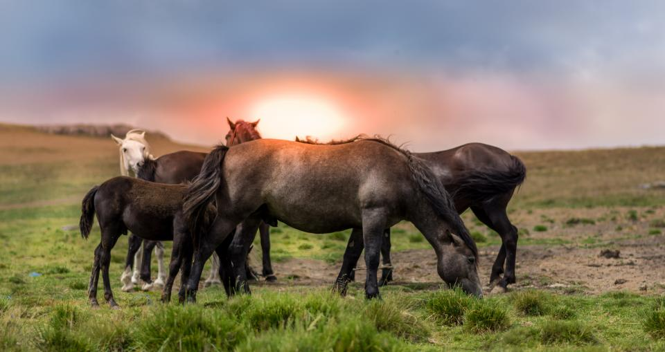 green grass highland grassland landscape nature horse animal sunset sunrise sky clouds