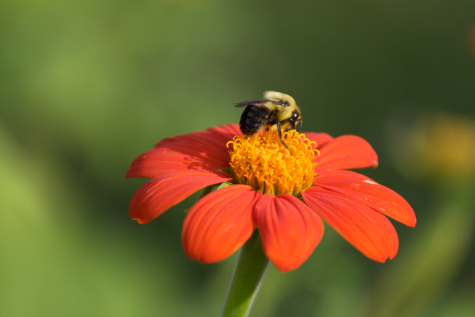 bee spring flower pollen nature outdoors organic natural garden fresh bloom blossom botany plants bug insect