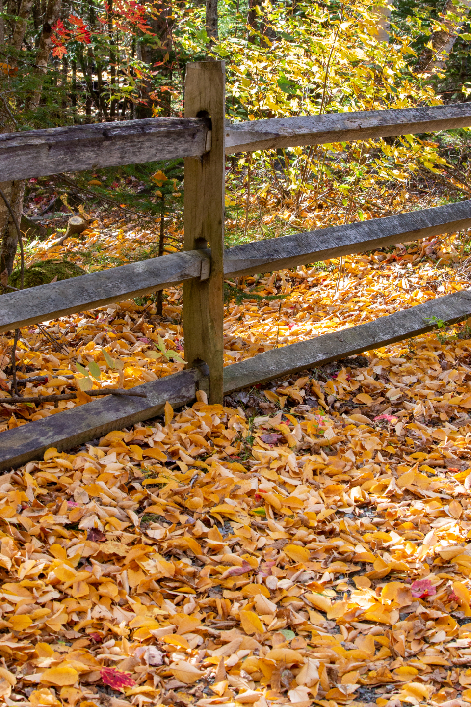 autumn leaves nature fence forest trail hiking colorful orange fall leaf park scenic outside foliage