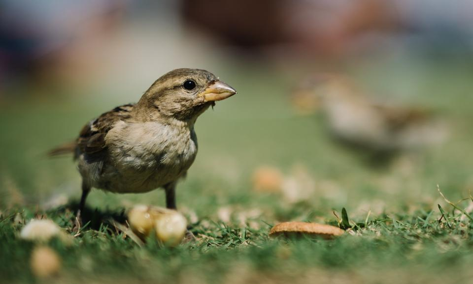 bird animal green grass leaf blur nature