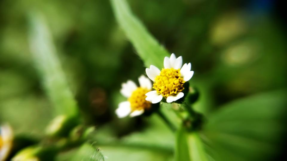 yellow flowers green leaf garden outdoor nature plant blur