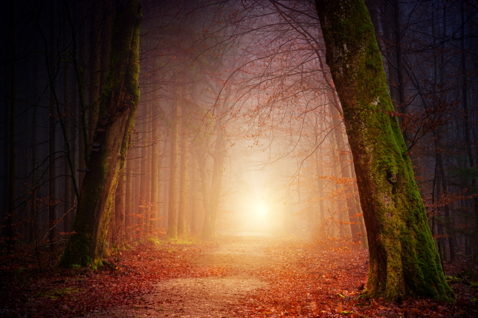 way path light forest fall autumn fog foggy magical mystic
