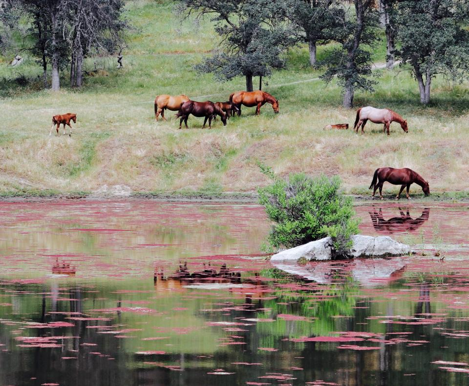 horse animal river water reflection highland green grass trees plants nature outdoor herd