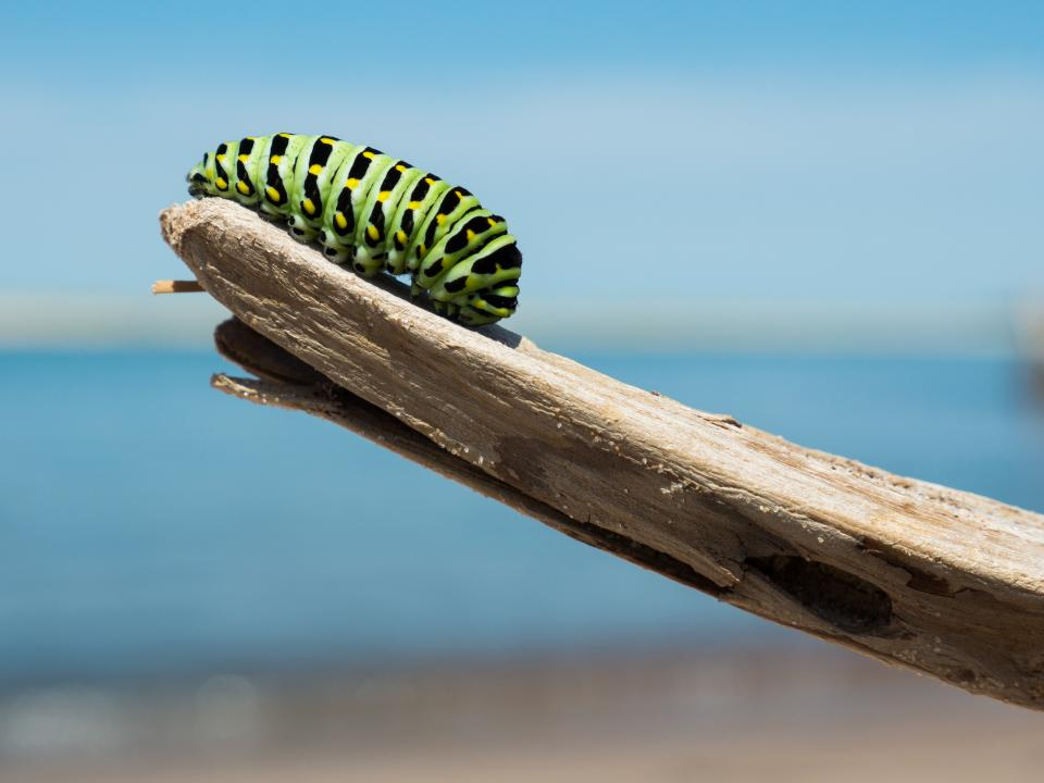 caterpillar insect animal wood sunny day nature outdoor