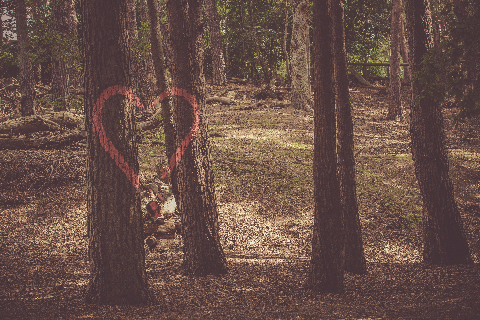 loveheart tree forest love romantic graffiti red paint outdoors