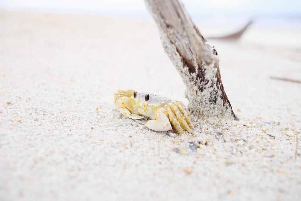 animals crustaceans crabs shells adorable cute sand branch yellow white beige