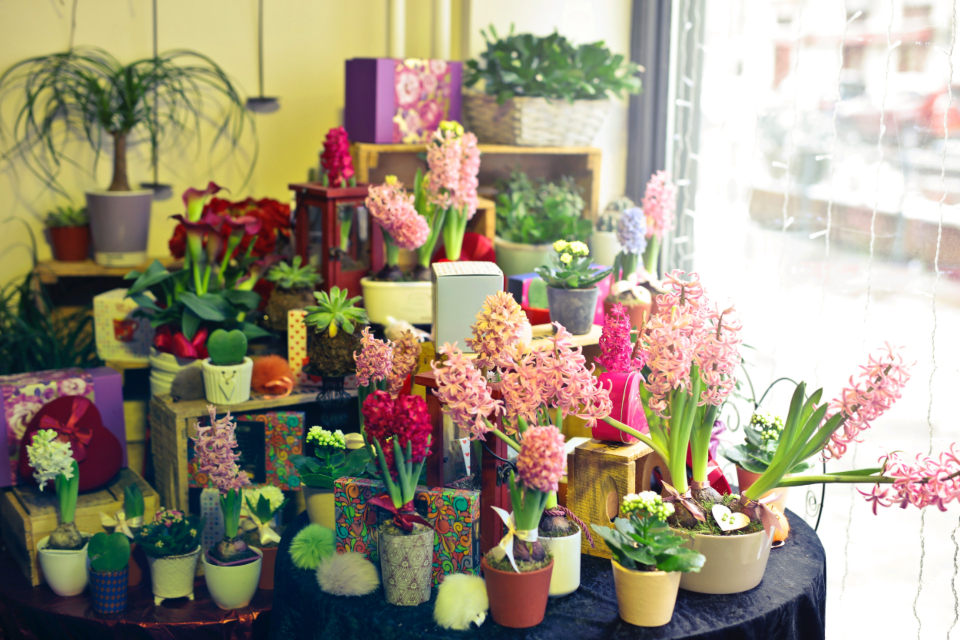 flower shop display ecommerce store nature plant green colorful petal pink red