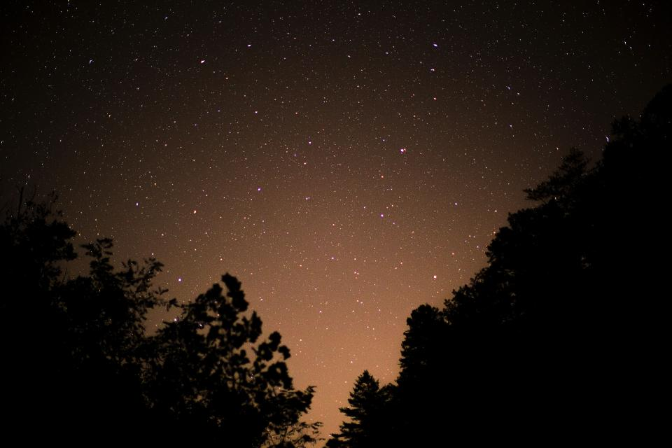 trees plant sky stars night silhouette