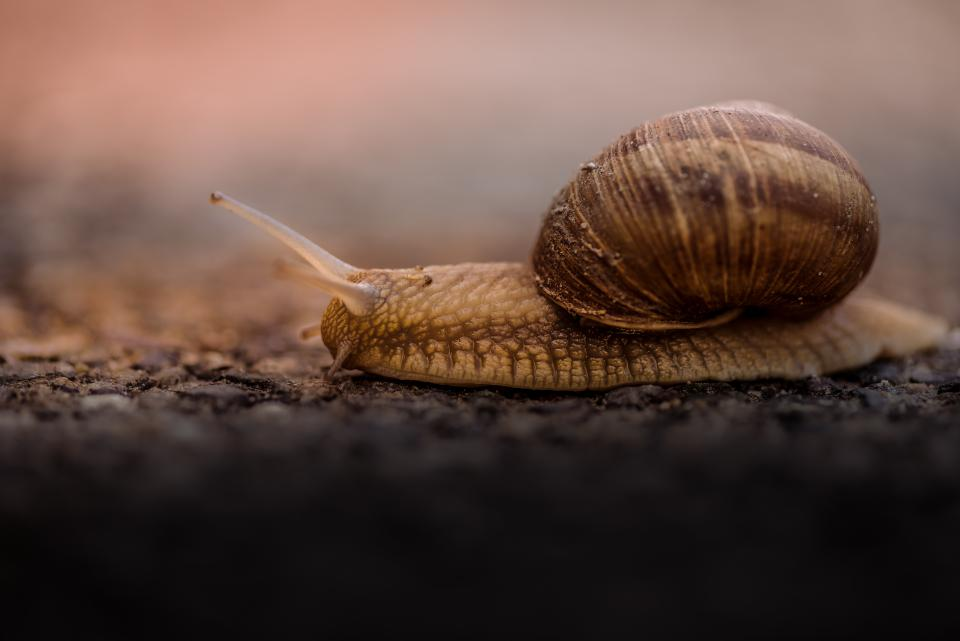 snail outdoor blur animal insect