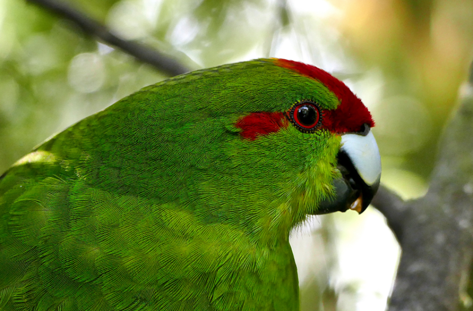 green parrot close up tropical bird wildlife animal nature outdoors trees forest jungle feathers