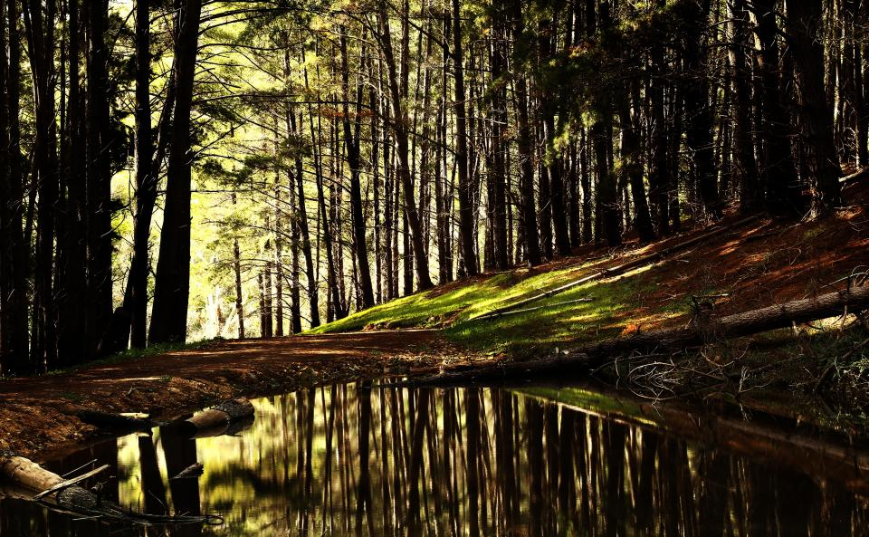 trees forest woods nature outdoors pond water reflection