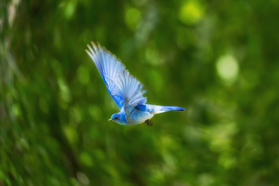 blue bird animal flying nature green plant blur bokeh