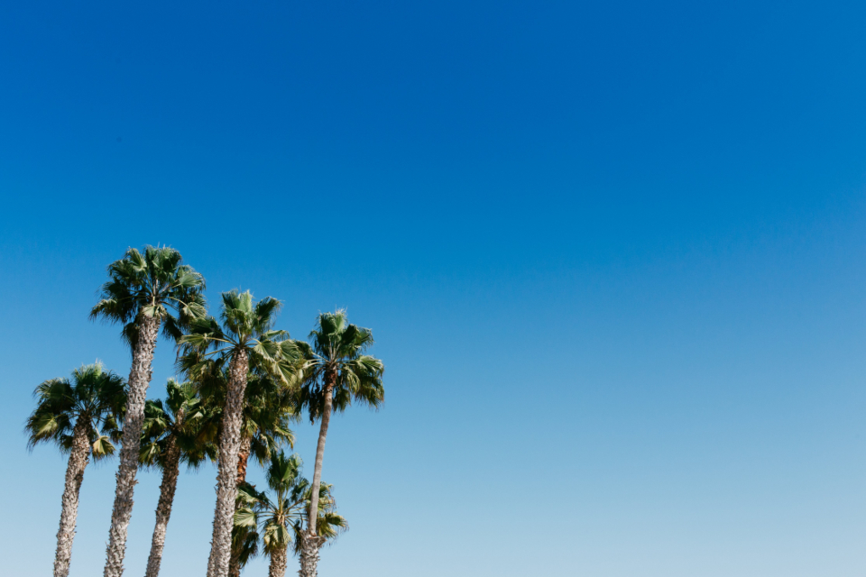 palm trees blue sky nature outdoors outside tropical palm leaves copy space gradient environment sunny summer warm vacation travel clear sky cloudless paradise scenic tourism