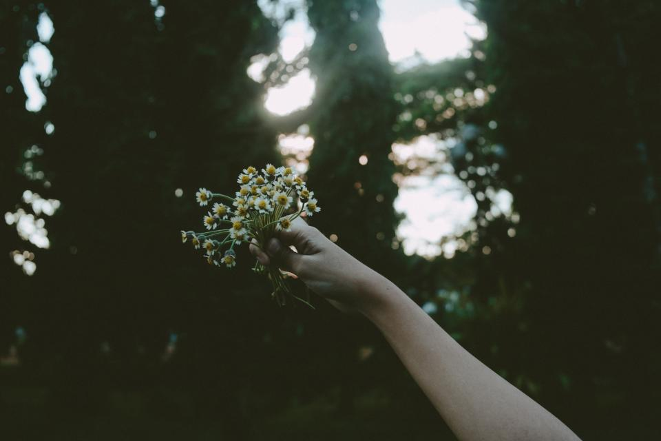woman girl lady people hand hold flowers trees nature sunlight dreamy bokeh