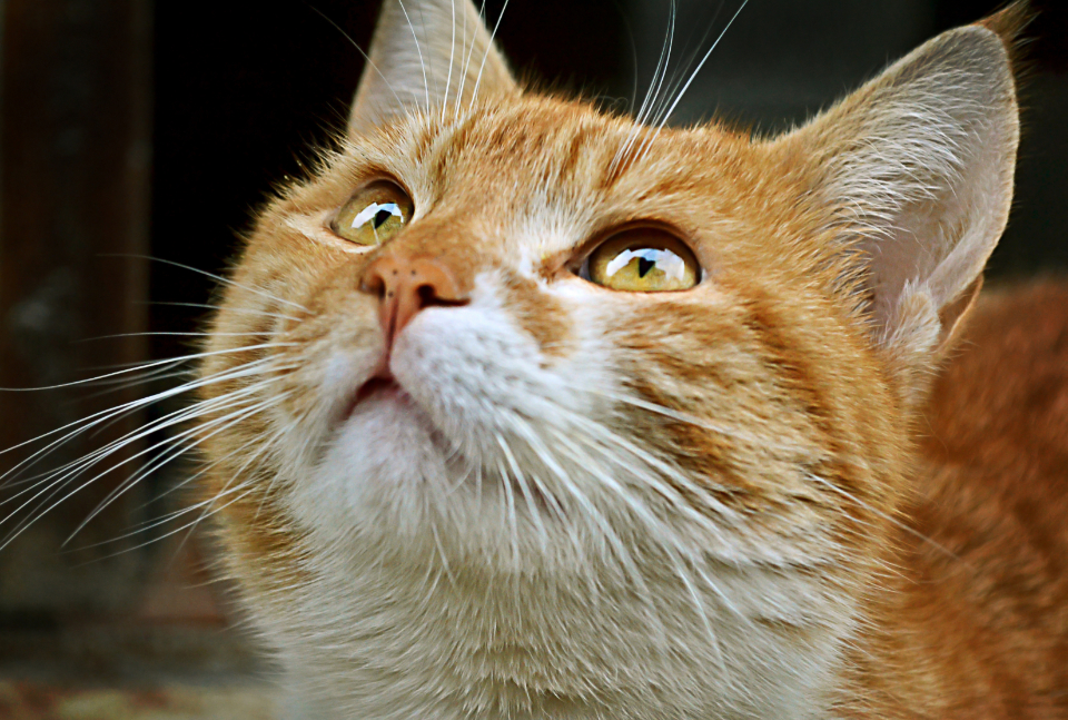 cat pet close up animals fur whiskers eyes outdoors