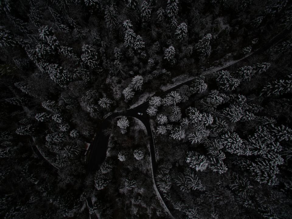 aerial view dark night tree plant forest