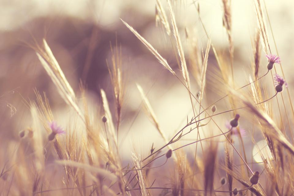 nature field wild grass flowers harvest sway sky outdoors bokeh