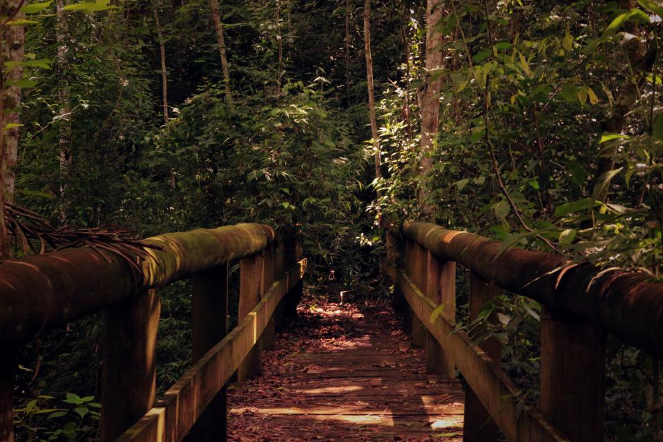 wooden bridge nature dark trees plant forest wood