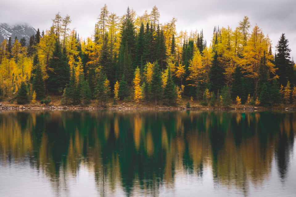 autumn foliage reflection water nature outdoors clouds environment climate trees forest travel