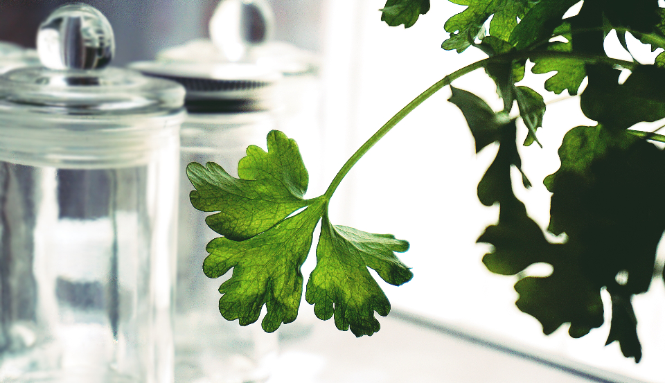 herbs parsley plants food food healthy jar glass kitchen green nature