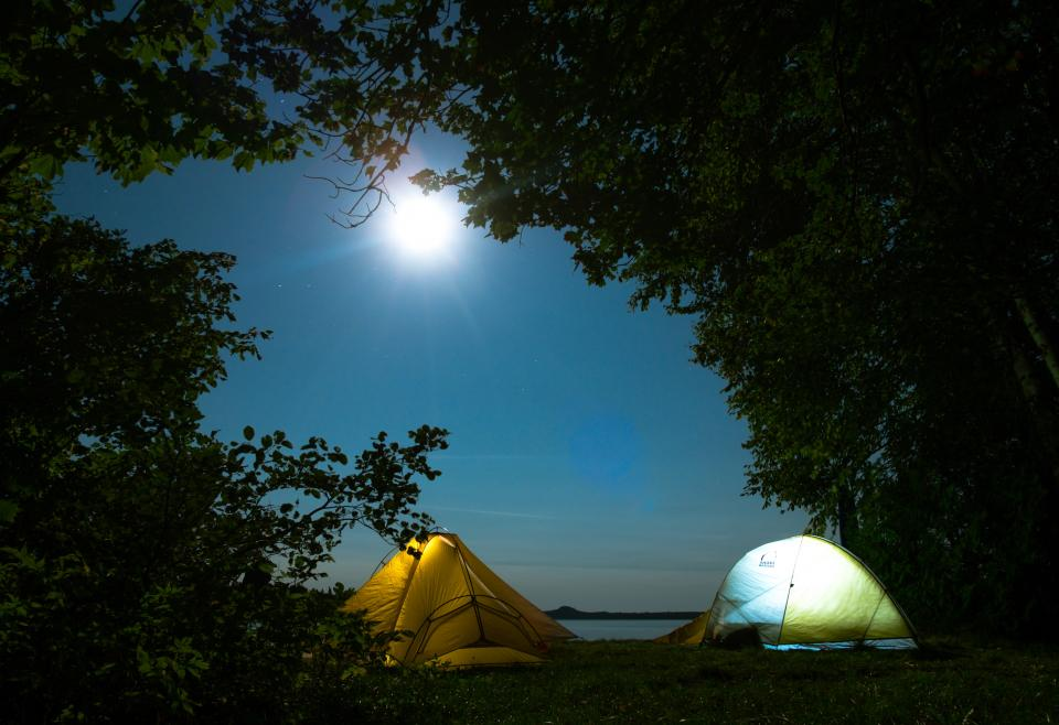 trees plant silhouette nature outdoor night moon light tent camping adventure travel