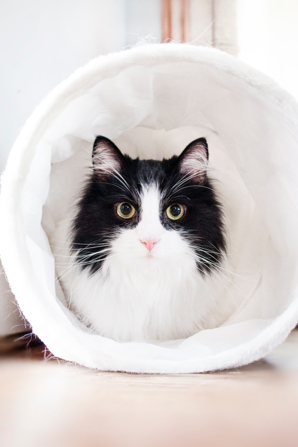 black white cat pet animal cats cute home house kitten kittens playtime happy