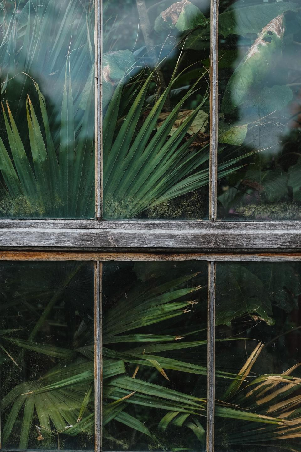 window shield glass green plants nature outside
