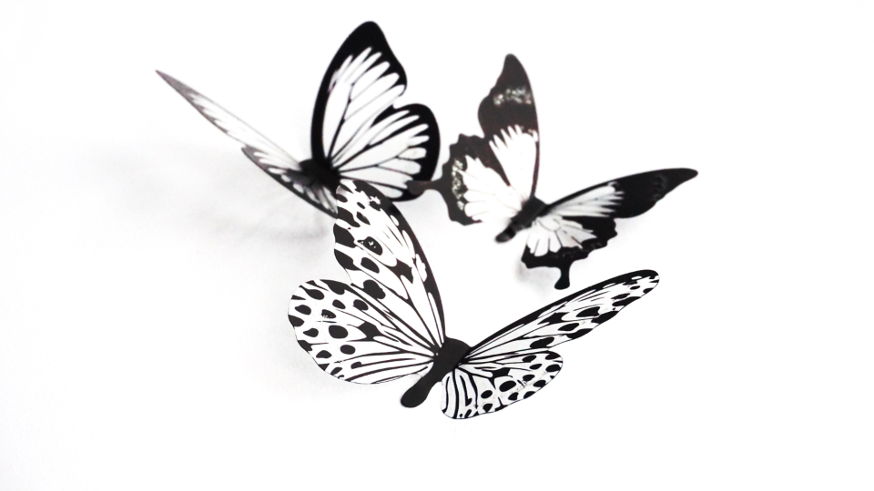 butterflies crafts silhouette art design black and white isolated objects white background