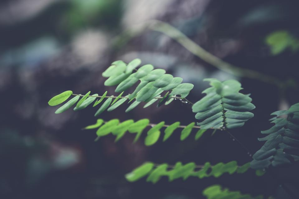 green leaf plant nature blur outdoor