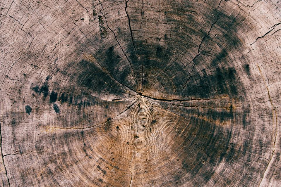 wood log texture lumber