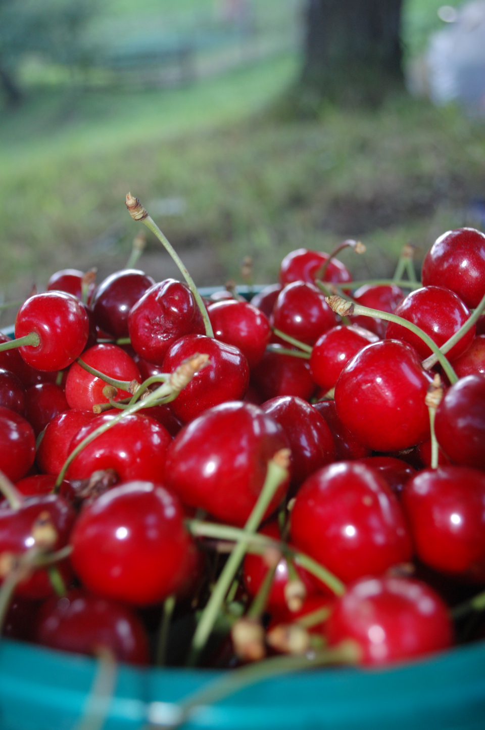 cherries fruit bowl food red grass