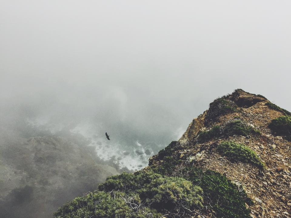 cliff coast fog bird flying nature outdoors shore ocean sea