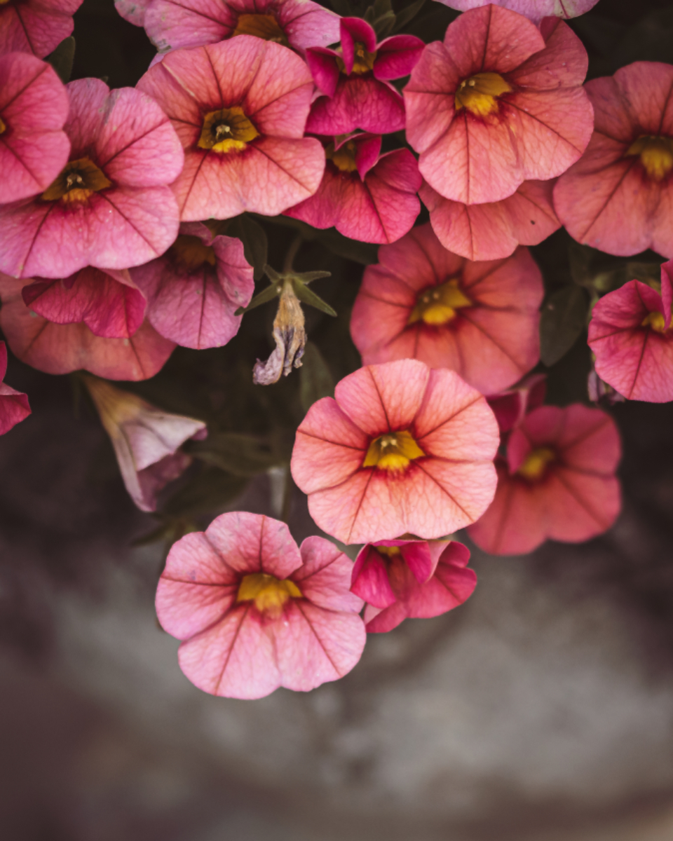 flowers floral background pink top fresh pastel bouquet color close up bunch nature plant organic natural beauty