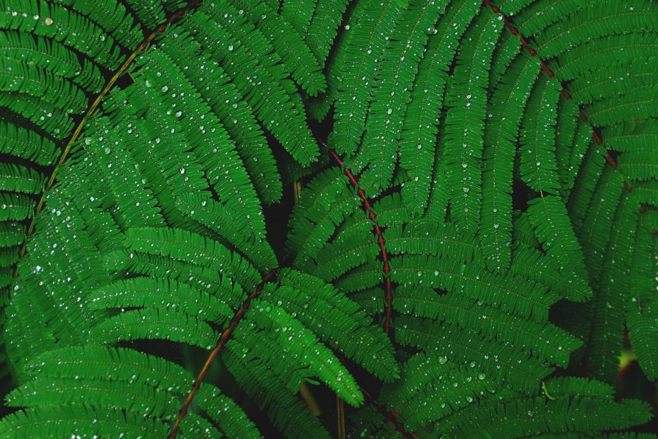 green plant leaves macro forest woods water drops
