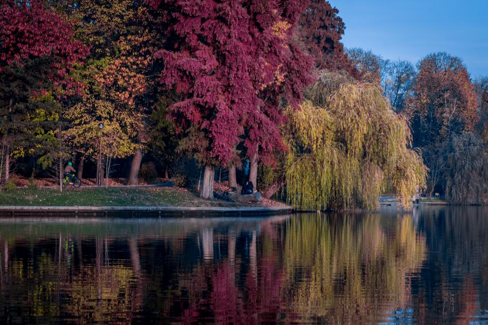 trees plants nature forest autumn fall grass lake water reflection nature blue ky