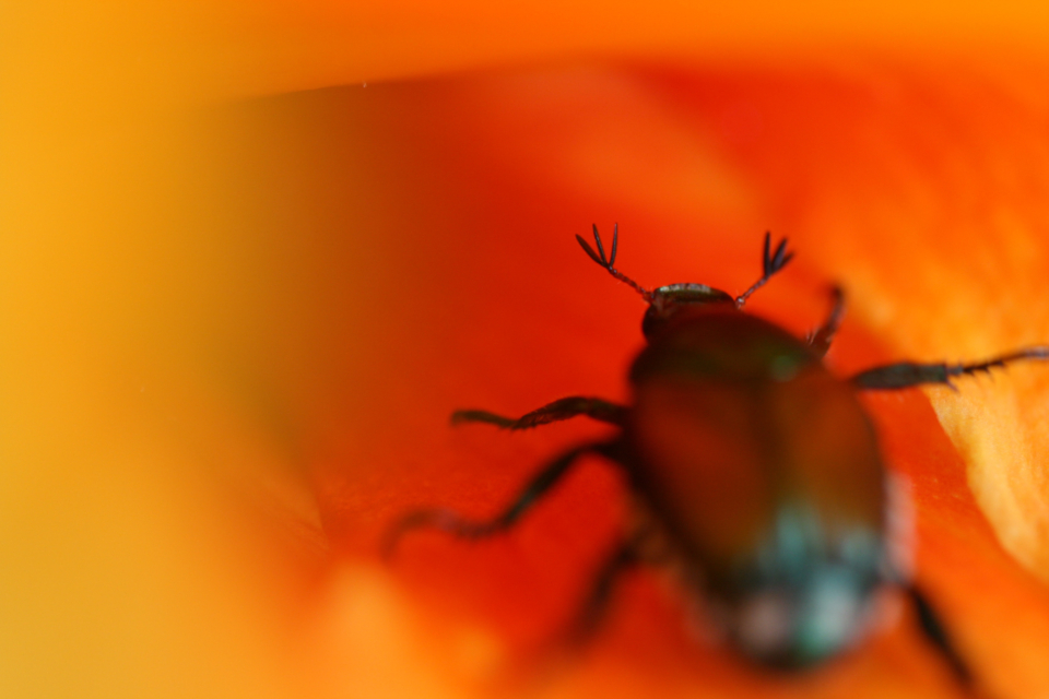 beetle macro flower insect close up bug plants floral animal nature wild colorful