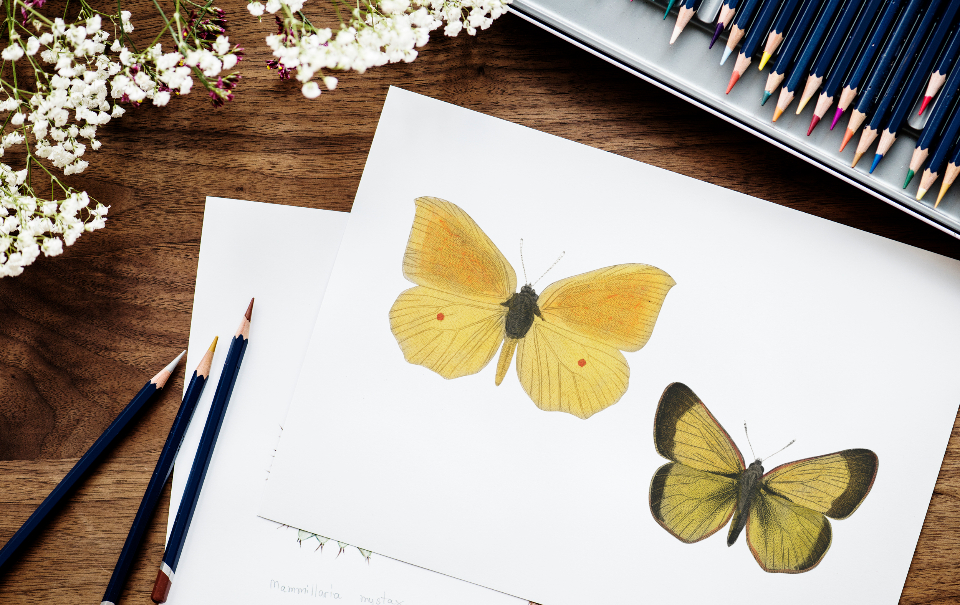 art butterfly color colorful coloring cute design drawing flat lay flatlay freelance freelancer hobby illustration illustrationist paper pen pencil person stationery tags work working workplace works