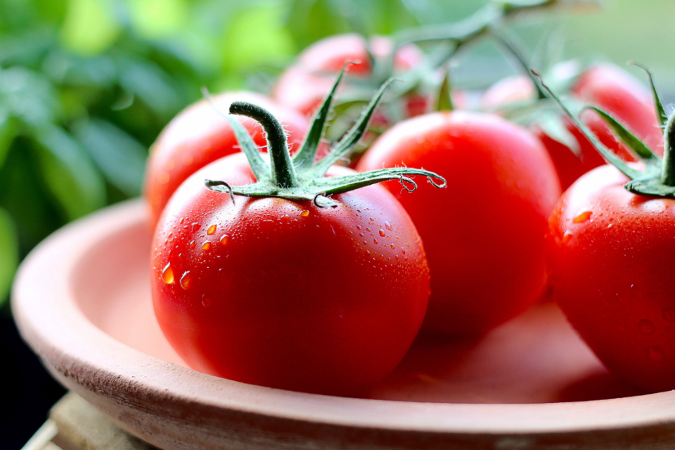wet tomatoes plate fresh red ripe organice natural garden healthy snack food salad ingredients fruit vegetable diet close up juicy raw vegetarian water droplets
