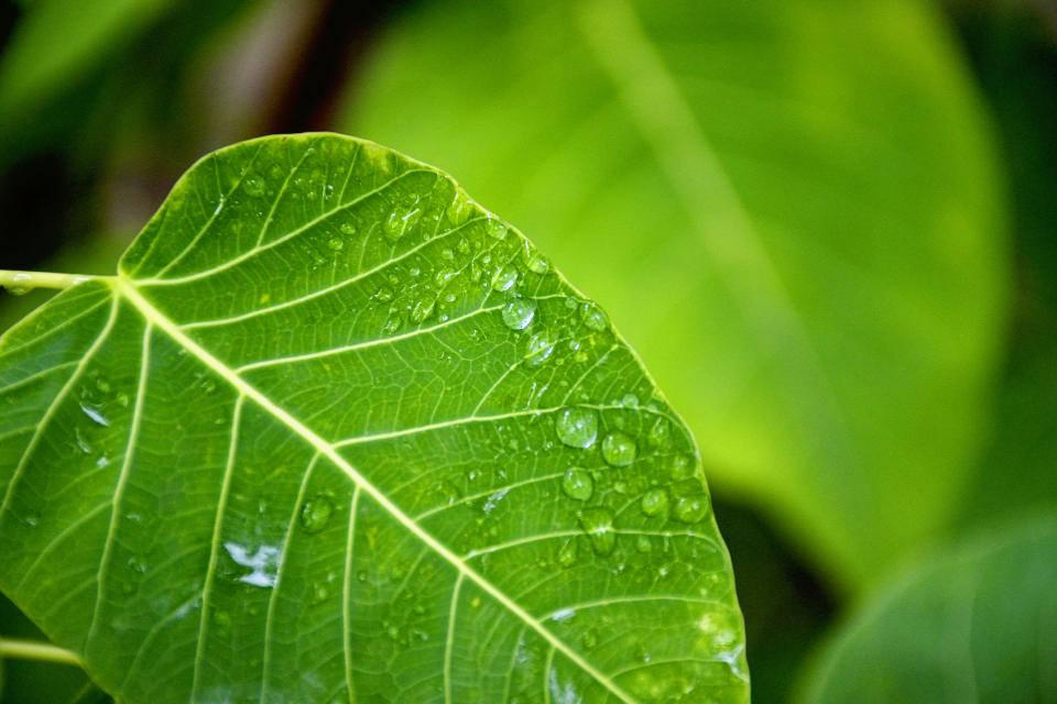 nature plants green leaves veins water dew dewdrops droplets