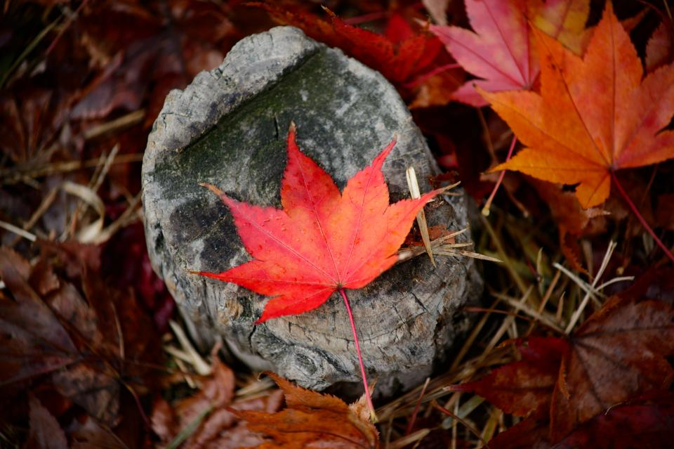 leaves fall autumn outdoor rocks grass nature