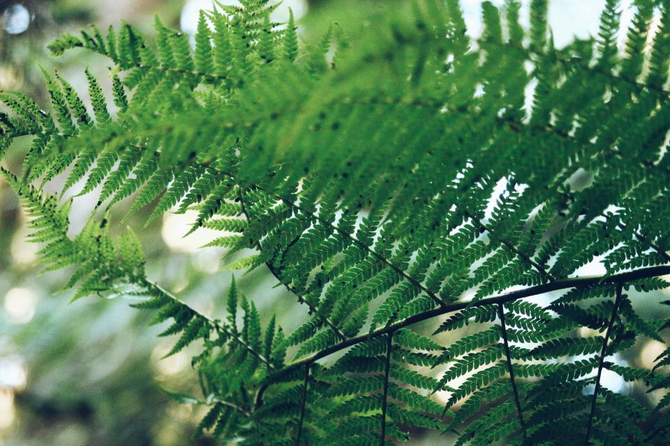 fern green leaf plant nature