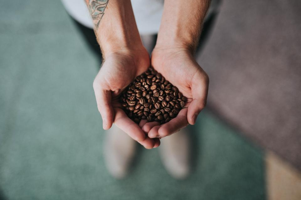 hand palm coffee beans seeds