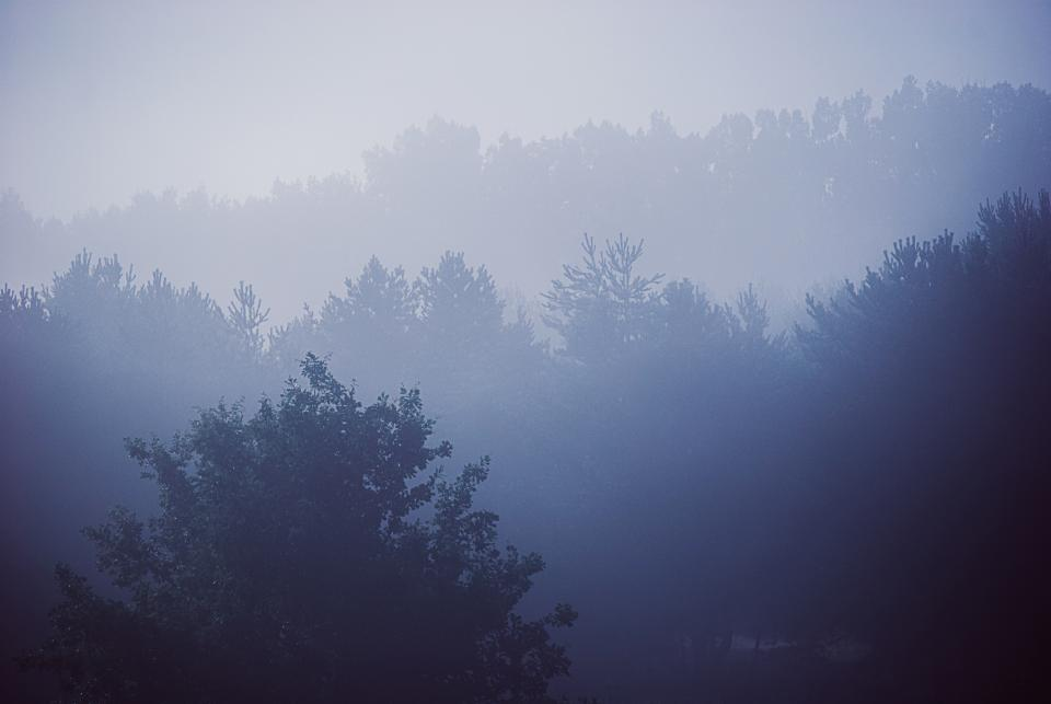 blue trees forest woods nature landscape foggy sky