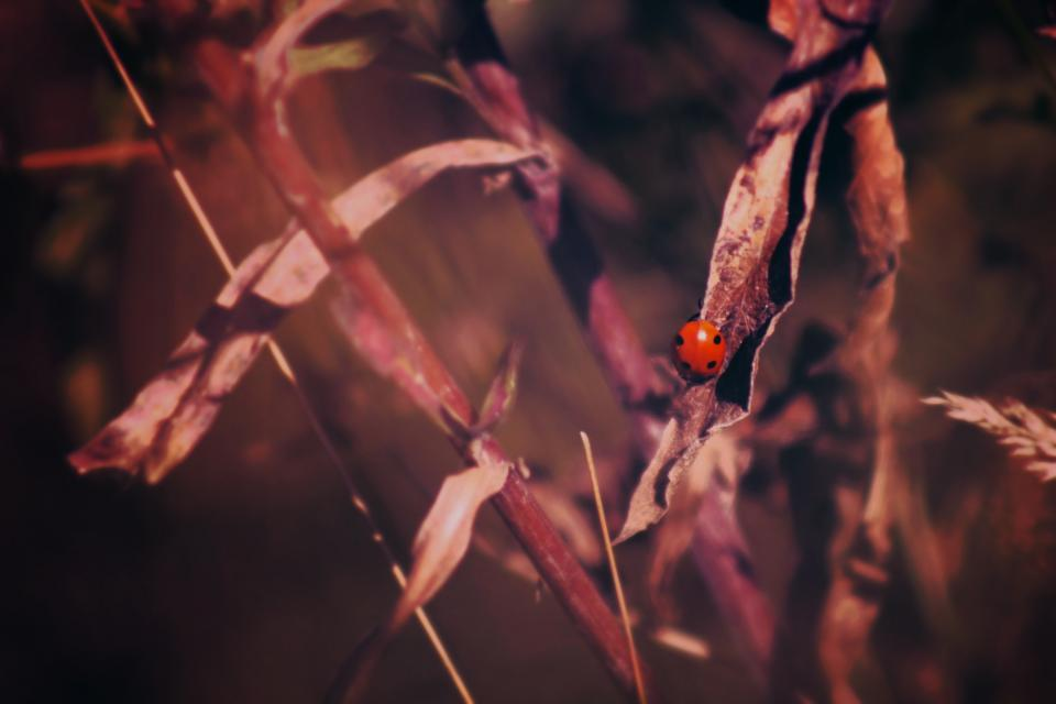 plant blur red beetle bug insect