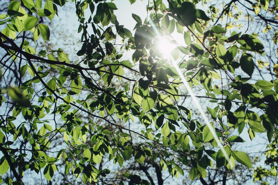 nature trees branches leaves sky light rays leaks summer spring