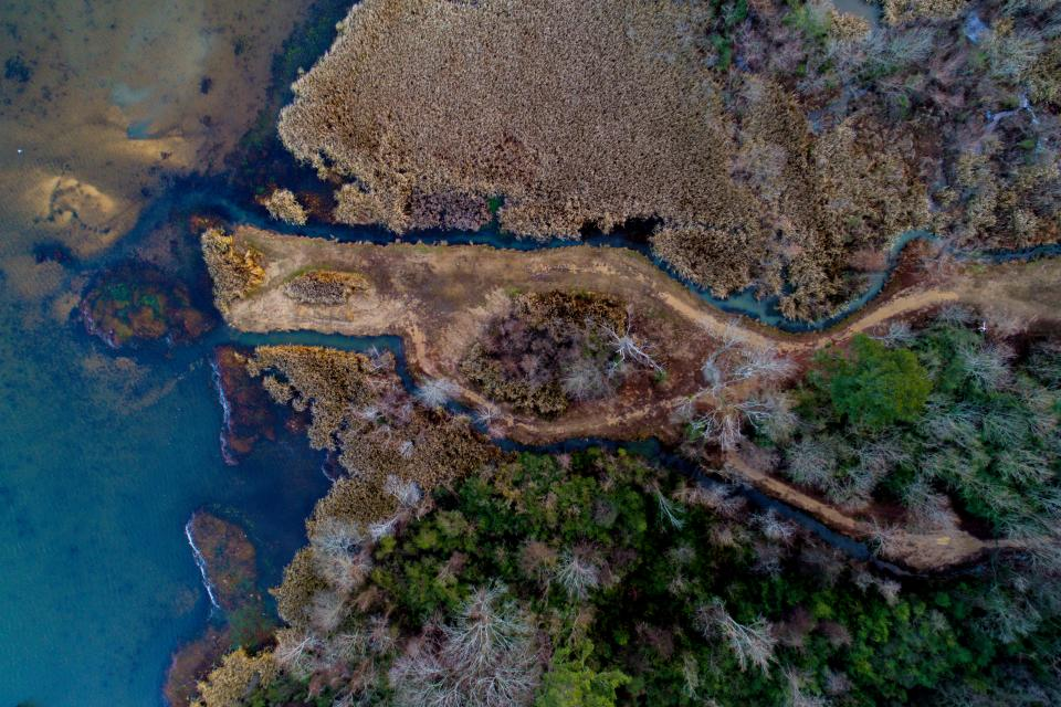 trees plant aerial view sea water nature outdoor landscape