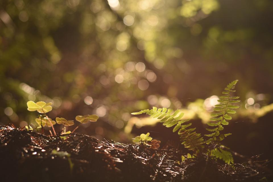 fern green leaf plant soil bokeh blur nature forest