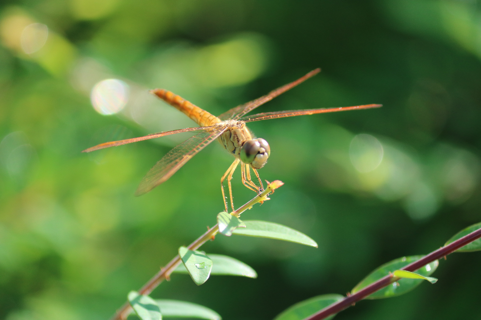 dragonfly insect plant green nature leaves