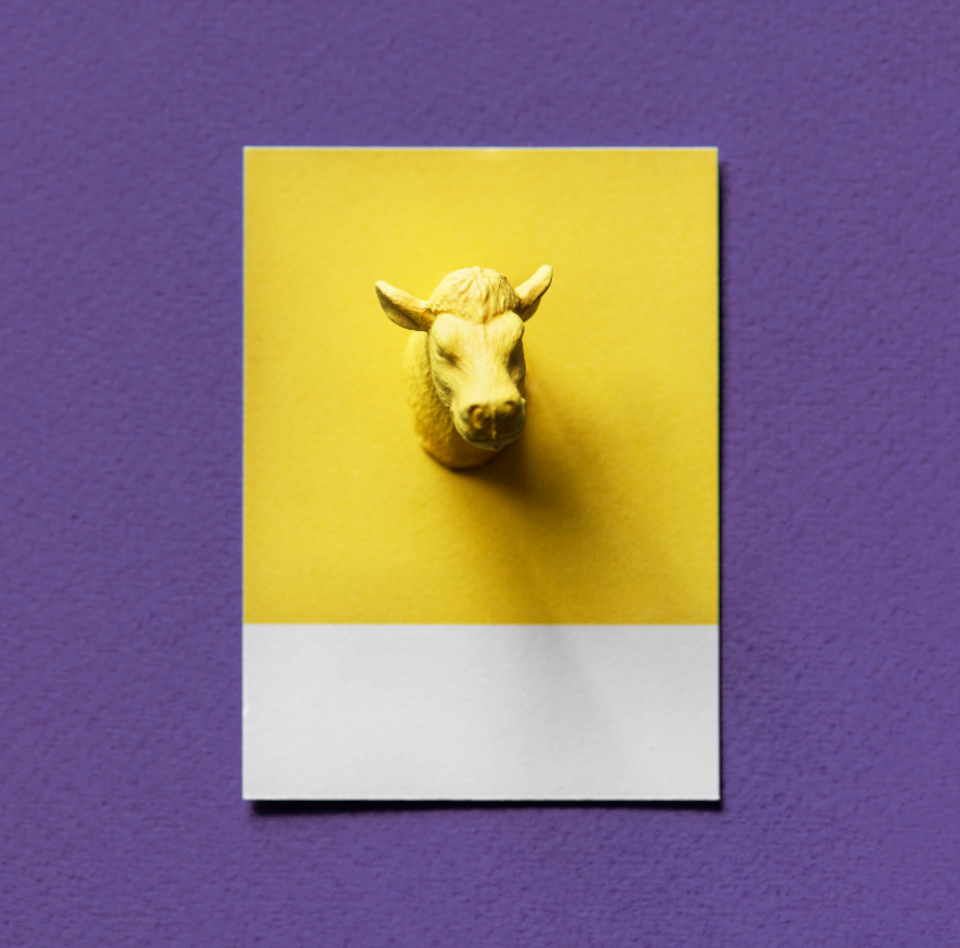 animal bull card colorful concept cow creative decoration figure fun head horns joy little mini miniature model ox paper pattern play shape small symbol textured tiny toy yellow